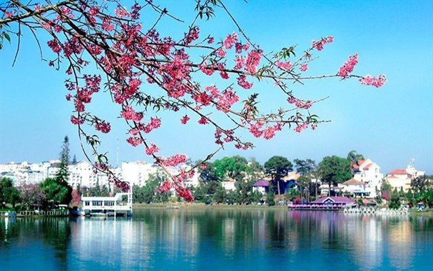 Da Lat cherry blossom festival to return this month